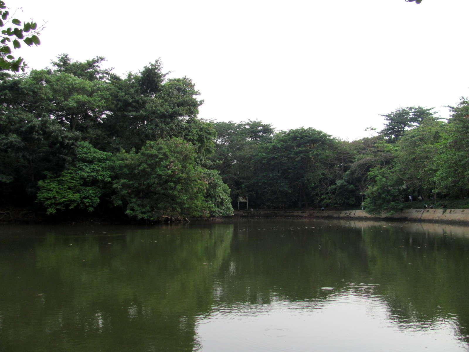 Pernahkah kamu membayangkan ada hutan dan danau di tengah kota Jakarta?